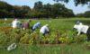 庄内緑地を美しくする会の活動日
