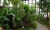 グリーンプラザの温室