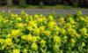庄内緑地の見ごろの花