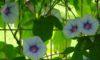 庄内緑地で見ごろの花