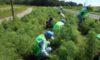 「庄内緑地を美しくする会」の活動日