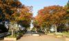 明日から「秋のバラまつり」