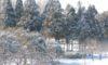 庄内緑地の雪景色
