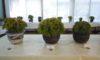 「現代押し花アート展」と「イワヒバ展」を開催
