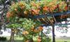 庄内緑地で咲いている夏の花