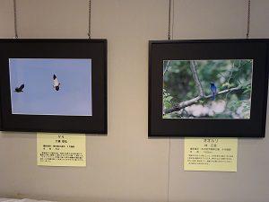 野鳥写真展①