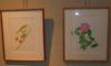 「ボタニカルアート展」が始まりました。