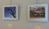 明日から「庄内緑地の花と緑の風景の写真展」を開催!
