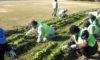 「庄内緑地を美しくする会」の活動