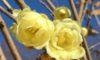 今日咲いている庄内緑地の花