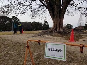 樹木診断①