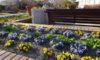 グリーンプラザの周りで咲いている花