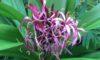 温室で咲いている花