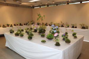 斑入り植物と苔玉展①