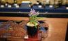 「ウチョウランと夏の小型蘭と山野草展」