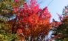 秋が深まって彩り豊かです