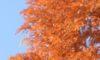庄内緑地の紅葉風景