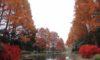 庄内緑地の紅葉がきれいです