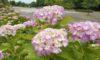 庄内緑地で見頃の花