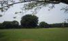今日の庄内緑地は静かです