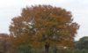 庄内緑地の紅葉が見頃です