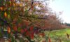 庄内緑地で紅葉が始まっています