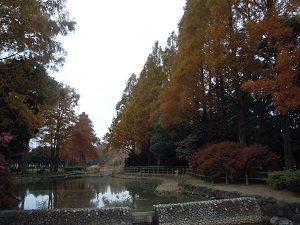 ガマ池紅葉