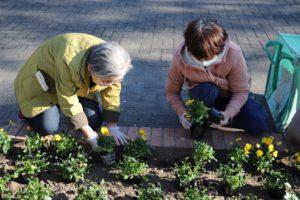 1129園芸福祉花壇⑥