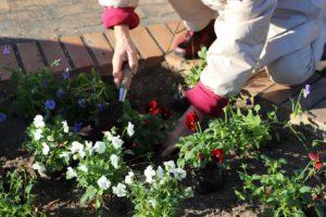 1129園芸福祉花壇⑦
