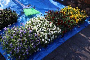 1129園芸福祉花壇①