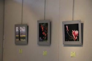 庄内緑地の花と緑の写真展④