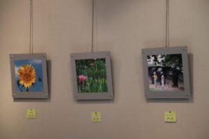 庄内緑地の花と緑の写真展②