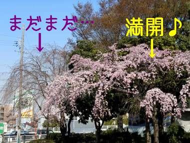 Hikakushidare2
